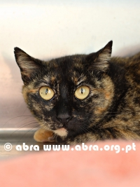 Magali (FIV+) FAT urgente